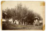 Bartholomew family in orchard with trick horse and unhitched carriage